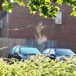 Spider web, morning sun, glorious summer